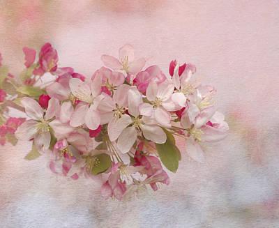 Pink Blush Poster by Kim Hojnacki