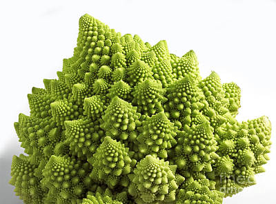 Romanesco Broccoli Or Cauliflower Poster by Gerard Lacz