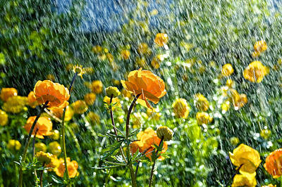 Spring Flowers In The Rain Poster