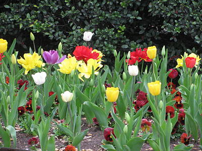 Springtime Glory Poster