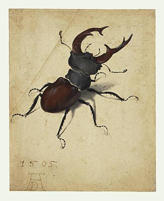 Stag Beetle Poster by Albrecht Durer