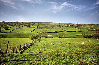 Swaledale Views Poster by Nichola Denny