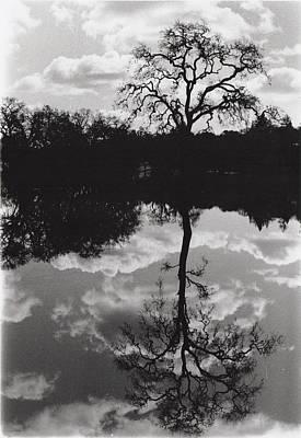 Tree Reflection Sebastopol Ca, Poster