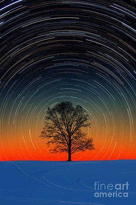 Tree With Star Trails Poster by Larry Landolfi