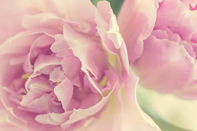 Tulips Poster by Cindy Grundsten