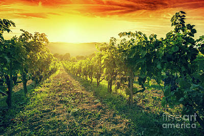 Vineyard In Tuscany, Italy. Wine Farm At Sunset. Vintage Poster