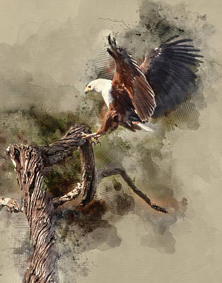 Water Paint African Fish Eagle Landing Poster by Ronel Broderick
