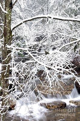 White Oak Run In Winter Poster by Thomas R Fletcher