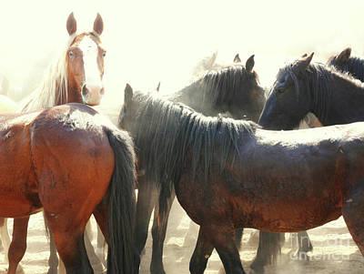 Wild Horses - Australian Brumbies 3 Poster