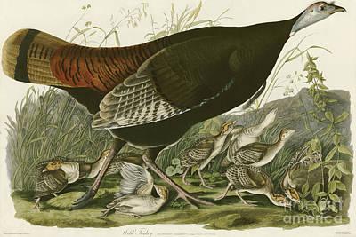 Wild Turkey Poster by MotionAge Designs
