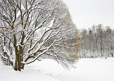 Winter Park Poster by Irina Afonskaya