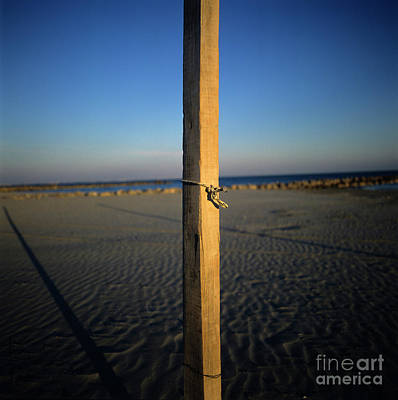 Wooden Post Poster