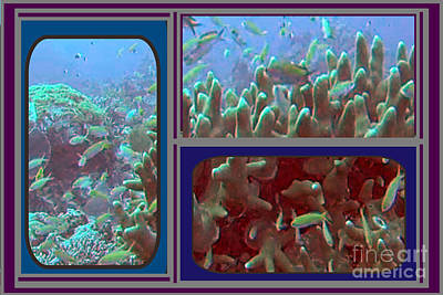 2015 Periscope Perspective Gallery Underwater Coral Reef Vegitation Photography In Landscape Format Poster