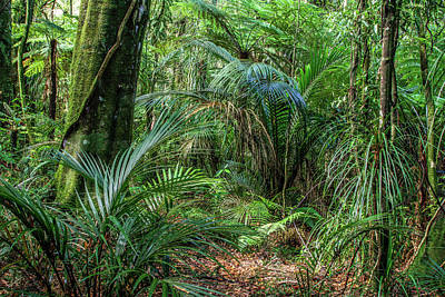 Poster featuring the photograph Jungle by Les Cunliffe