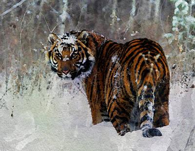 Tiger Poster by Anna J Davis