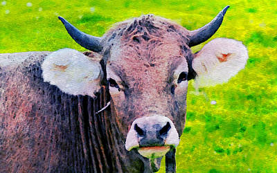 Bull Poster by Anna J Davis