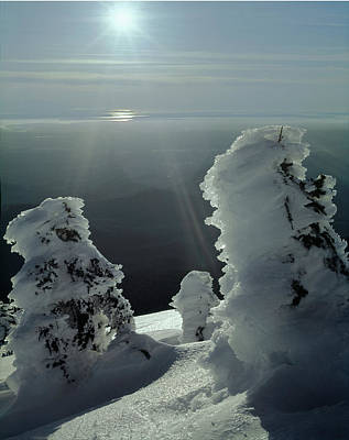 2m4415 A Ice Covered Trees Over Puget Sound Poster