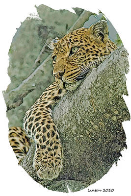 African Leopard Poster by Larry Linton