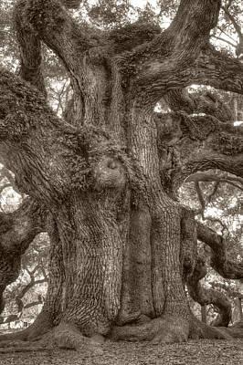 Angel Oak Live Oak Tree Poster