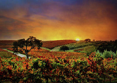 Autumn Vineyard Poster by Stephanie Laird