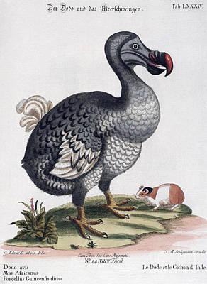 Dodo Bird Raphus Cucullatus, Extinct Poster