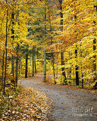 Fall On The Road To School Lake Poster by Twenty Two North Photography