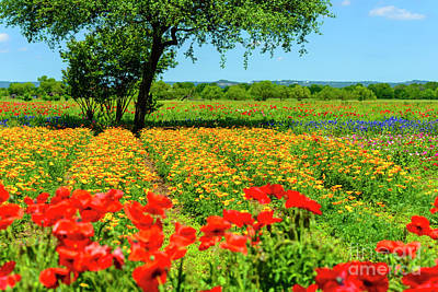 Hill Country In Bloom Poster by Thomas R Fletcher