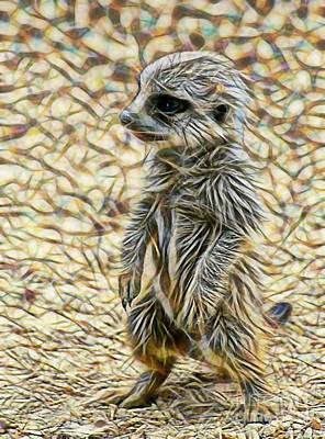 Meerkat Poster