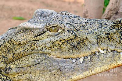 Nile Crocodile Poster by George Atsametakis
