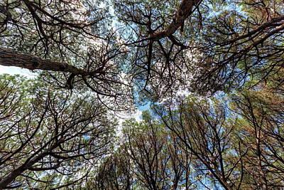 Pinewood Forest, Cecina, Tuscany, Italy Poster by Elenarts - Elena Duvernay photo
