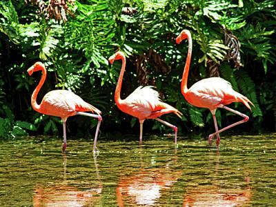 3 Pink Flamingos Poster