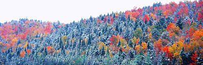 Snow And Autumn Trees, Adirondack Poster