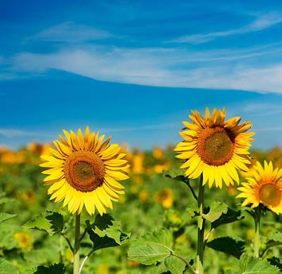 Sunflower Poster by Boyan Dimitrov