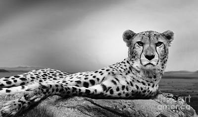 Poster featuring the photograph The Cheetah by Christine Sponchia