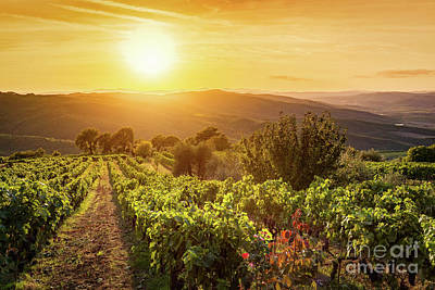 Vineyard Landscape In Tuscany, Italy. Wine Farm At Sunset Poster