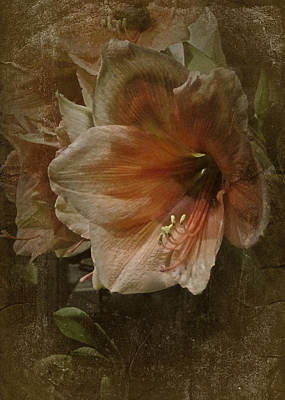 Poster featuring the photograph Vintage Amaryllis by Richard Cummings