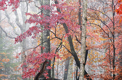 Autumn Monongahela National Forest Poster by Thomas R Fletcher