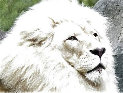 Lion Poster by Anna J Davis