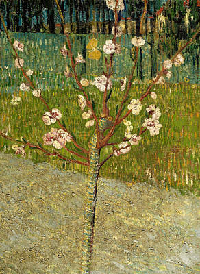 Almond Tree In Blossom Poster by Vincent van Gogh