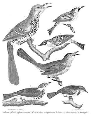 American Ornithology Poster