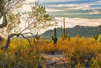 Arizona Sonoran Desert Poster by Jon Berghoff