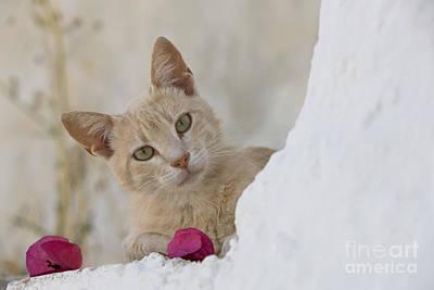 Cat On A Wall, Greece Poster by Jean-Louis Klein & Marie-Luce Hubert