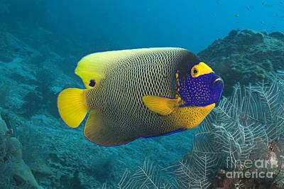 Malaysia Marine Life Poster