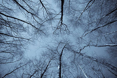 Trees In Epping Forest Poster