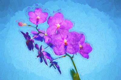 Vanda Orchids Pachara Delight Poster