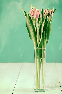 Wet Pink Tulip Flowers In Vase Poster