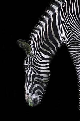 Zebra Stripes Poster