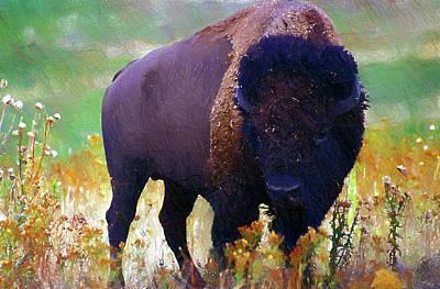 Bison Poster by Anna J Davis