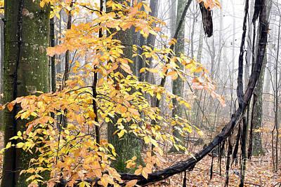 Autumn Monongahela National Forest Poster