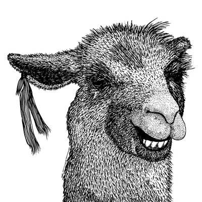 Llama Poster by Karl Addison